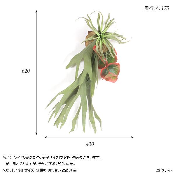 00a44162-size.jpg